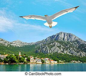 Seagull flying over the sea near Gradac town, Croatia.