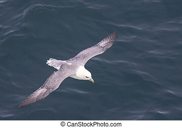 Seagull flying over the surface of the ocean