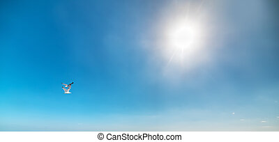seagull flying under a bright sun