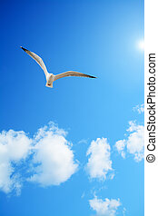 seagull flying under the sun