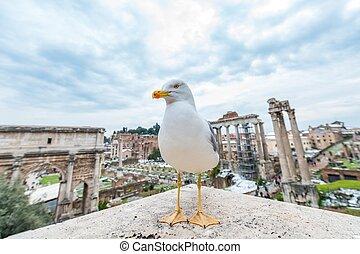 Seagull i Rome