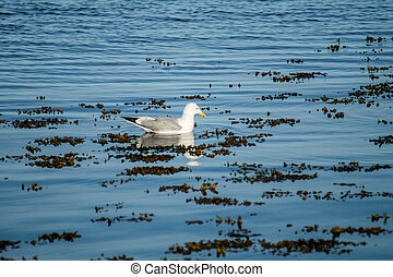 Seagull in a blue sea