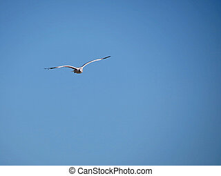 Seagull in Flight - A lone seagull flying in a clear blue...