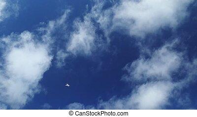 Seagull in flight in SLOW MOTION - SLOW MOTION: Seagull ...