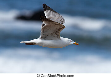 Seagull in flight over sea in a beautiful sunny day