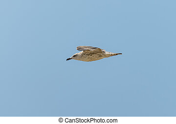 Seagull in fly
