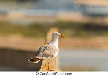 Seagull in front of a city