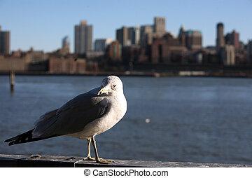 seagull in Manhattan, view to Bronx