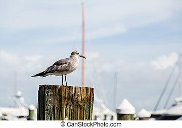 Seagull in Marina Horizontal