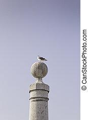 Seagull in Port