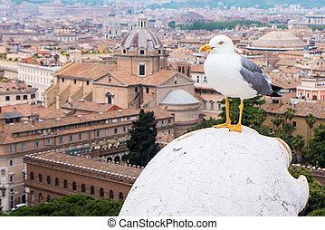 seagull in roma