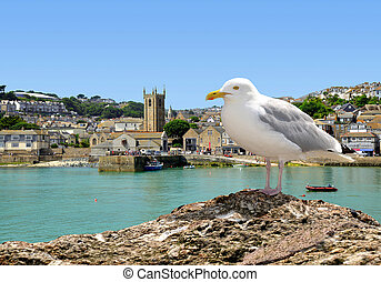 Seagull in St Ives harbour Cornwall England UK