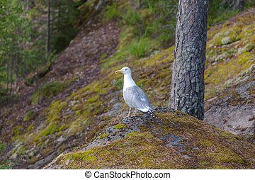 Seagull in the forest