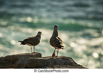 Seagull in the rocks in the ocean