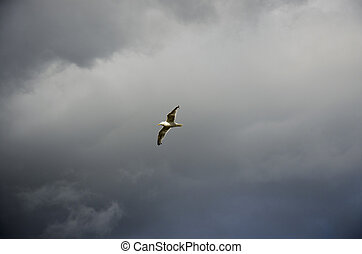 Seagull in the sky before the storm