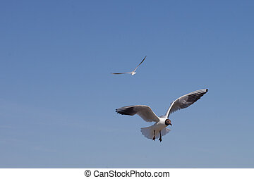Seagull in the sky