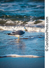 Seagull in the Wave