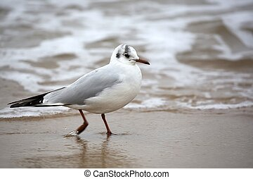 Seagull in the wild