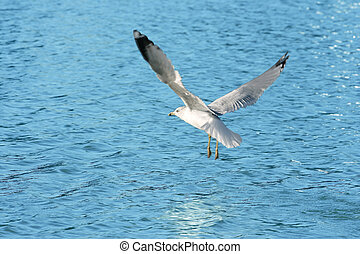 Seagull Lake