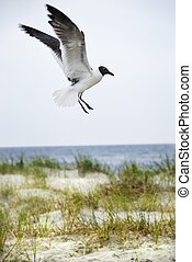 Seagull landing on beach.