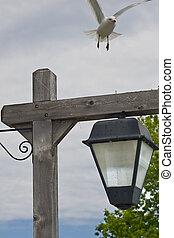 Seagull landing on Lamp Post