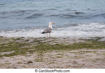 Seagull looks at the sea