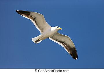 seagull, lot