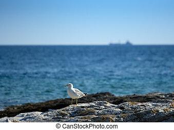 seagull, na, przedimek określony przed rzeczownikami, skalista plaża