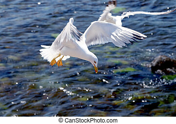 Seagull on a background of the sea