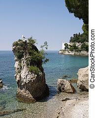 Seagull on a big rock