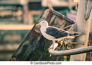 Seagull on a boat