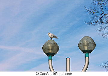 Seagull on a lamppost on sky background