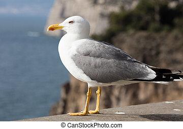 Seagull on a marine backround