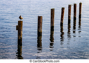 Seagull on a post in a harbor