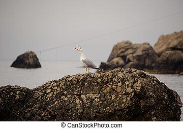 Seagull on a rock by the sea. Crimea