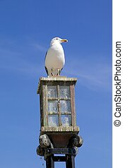 Seagull on a street lamp