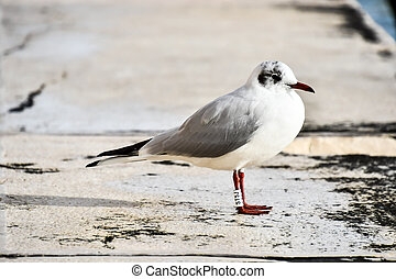 seagull on beach, photo as a background