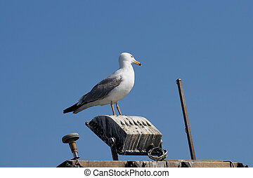 seagull on boat at sea