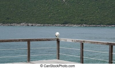 Seagull on boat moorage. Close-up. In Montenegro