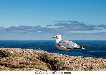 Seagull on Boulders