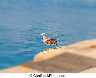 Seagull on dock background