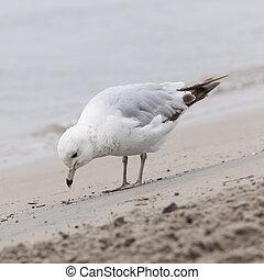 Seagull on foggy beach