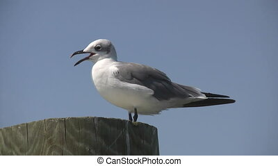 Seagull stands on pier piling looking around with feathers blowing in the wind.
