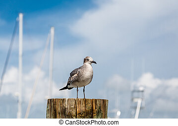 Seagull on Post by Masts