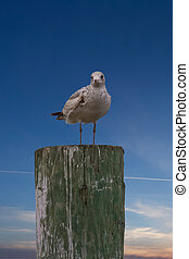 Seagull on Post on Nice Sky