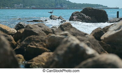 Seagull on Rock - Beautiful seagull resting on the rocky...