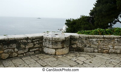 Seagull on rock fence glidecam footage - Seagull on rock...