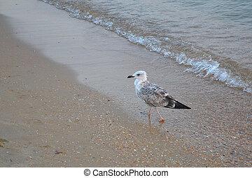 seagull on sand on a beach