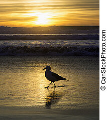 seagull on shore at sunset