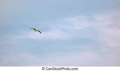 Seagull on sky background. Flight of bird in slow-mo.